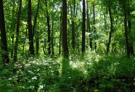 Zrównoważona gospodarka leśna