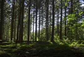 Ruszył konkurs architektoniczny na pierwsze w Polsce osiedle z drewna