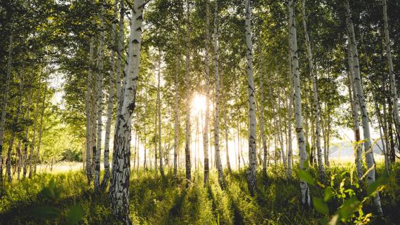 """Pakiet klimatyczny """"Fit for 55"""" daje nowy impuls do wykorzystania drewna w budownictwie"""
